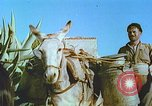 Image of Farmers using animals for transportation Europe, 1950, second 27 stock footage video 65675060860