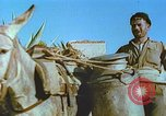 Image of Farmers using animals for transportation Europe, 1950, second 28 stock footage video 65675060860