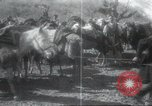 Image of Albania troops Europe, 1917, second 26 stock footage video 65675060929