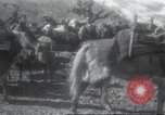 Image of Albania troops Europe, 1917, second 28 stock footage video 65675060929