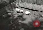 Image of chicken United States USA, 1920, second 11 stock footage video 65675060944