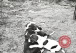 Image of chicken United States USA, 1920, second 31 stock footage video 65675060944