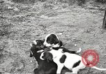 Image of chicken United States USA, 1920, second 32 stock footage video 65675060944