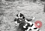 Image of chicken United States USA, 1920, second 35 stock footage video 65675060944