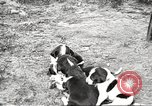 Image of chicken United States USA, 1920, second 39 stock footage video 65675060944