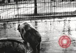 Image of bears United States USA, 1920, second 2 stock footage video 65675060945