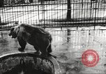 Image of bears United States USA, 1920, second 3 stock footage video 65675060945