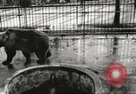 Image of bears United States USA, 1920, second 4 stock footage video 65675060945