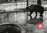 Image of bears United States USA, 1920, second 5 stock footage video 65675060945