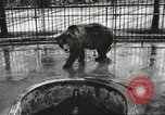 Image of bears United States USA, 1920, second 7 stock footage video 65675060945