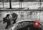 Image of bears United States USA, 1920, second 9 stock footage video 65675060945