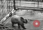 Image of bears United States USA, 1920, second 14 stock footage video 65675060945