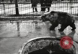 Image of bears United States USA, 1920, second 18 stock footage video 65675060945