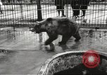 Image of bears United States USA, 1920, second 19 stock footage video 65675060945