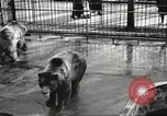 Image of bears United States USA, 1920, second 21 stock footage video 65675060945