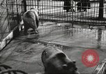 Image of bears United States USA, 1920, second 22 stock footage video 65675060945
