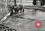 Image of bears United States USA, 1920, second 24 stock footage video 65675060945