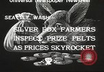 Image of black foxes Seattle Washington USA, 1934, second 9 stock footage video 65675061007