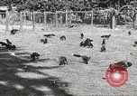 Image of black foxes Seattle Washington USA, 1934, second 18 stock footage video 65675061007