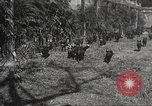 Image of black foxes Seattle Washington USA, 1934, second 27 stock footage video 65675061007
