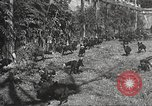 Image of black foxes Seattle Washington USA, 1934, second 29 stock footage video 65675061007