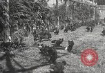 Image of black foxes Seattle Washington USA, 1934, second 31 stock footage video 65675061007
