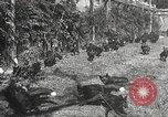 Image of black foxes Seattle Washington USA, 1934, second 32 stock footage video 65675061007