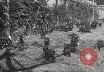Image of black foxes Seattle Washington USA, 1934, second 35 stock footage video 65675061007