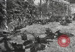 Image of black foxes Seattle Washington USA, 1934, second 36 stock footage video 65675061007