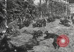 Image of black foxes Seattle Washington USA, 1934, second 37 stock footage video 65675061007