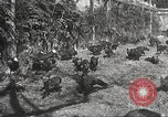 Image of black foxes Seattle Washington USA, 1934, second 38 stock footage video 65675061007