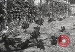 Image of black foxes Seattle Washington USA, 1934, second 41 stock footage video 65675061007