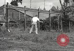 Image of black foxes Seattle Washington USA, 1934, second 49 stock footage video 65675061007