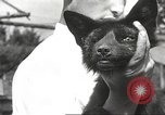 Image of black foxes Seattle Washington USA, 1934, second 55 stock footage video 65675061007