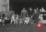 Image of young cows Bristol Pennsylvania USA, 1934, second 10 stock footage video 65675061024