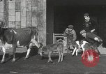 Image of young cows Bristol Pennsylvania USA, 1934, second 13 stock footage video 65675061024