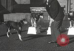 Image of dogs training for stage performance Boston Massachusetts USA, 1934, second 23 stock footage video 65675061028