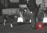Image of dogs training for stage performance Boston Massachusetts USA, 1934, second 24 stock footage video 65675061028