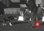 Image of dogs training for stage performance Boston Massachusetts USA, 1934, second 25 stock footage video 65675061028