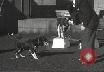 Image of dogs training for stage performance Boston Massachusetts USA, 1934, second 26 stock footage video 65675061028