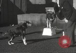 Image of dogs training for stage performance Boston Massachusetts USA, 1934, second 27 stock footage video 65675061028