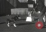 Image of dogs training for stage performance Boston Massachusetts USA, 1934, second 28 stock footage video 65675061028