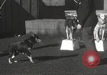 Image of dogs training for stage performance Boston Massachusetts USA, 1934, second 29 stock footage video 65675061028