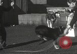 Image of dogs training for stage performance Boston Massachusetts USA, 1934, second 31 stock footage video 65675061028