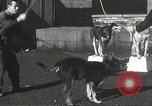 Image of dogs training for stage performance Boston Massachusetts USA, 1934, second 32 stock footage video 65675061028