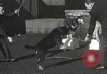 Image of dogs training for stage performance Boston Massachusetts USA, 1934, second 34 stock footage video 65675061028