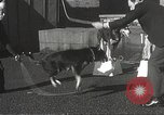Image of dogs training for stage performance Boston Massachusetts USA, 1934, second 35 stock footage video 65675061028