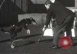Image of dogs training for stage performance Boston Massachusetts USA, 1934, second 37 stock footage video 65675061028