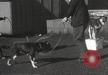 Image of dogs training for stage performance Boston Massachusetts USA, 1934, second 40 stock footage video 65675061028