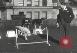 Image of dogs training for stage performance Boston Massachusetts USA, 1934, second 42 stock footage video 65675061028